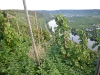 coteau-de-la-mosel-07-2010