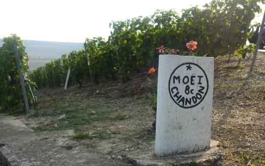 vignoble Moët & Chandon, vallée de la Marne