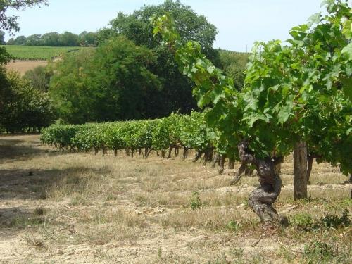 Vignoble d'Aubigné -sur-Layon