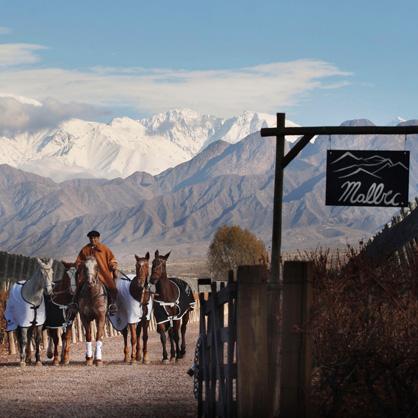 Terre des Andes en Argentine