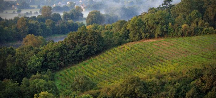 Quarts-de-Chaume, vignoble du château de Plaisance