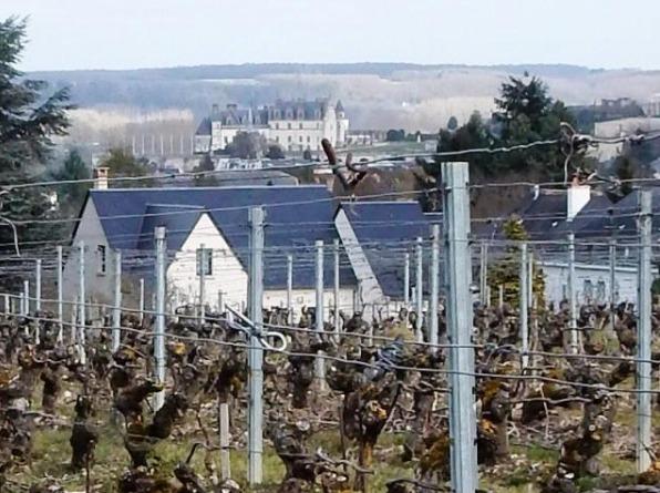 Vignoble du domaine de la Gabillière à Amboise