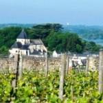 Du vignoble, on voit la collégiale Saint-Denis d'Amboise