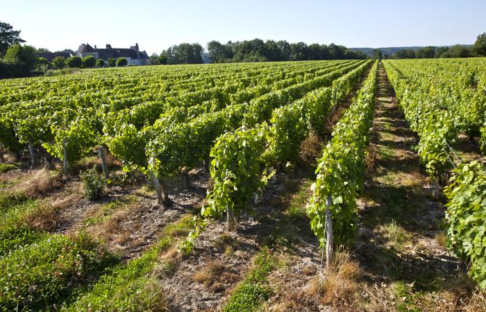 Vouvray, le domaine de Montfort et son château. Le vignoble s'étend sur un parcellaire de 35 ha sur la commune de Noizay