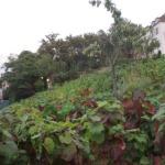 Clos.Montmartre.2 600jp