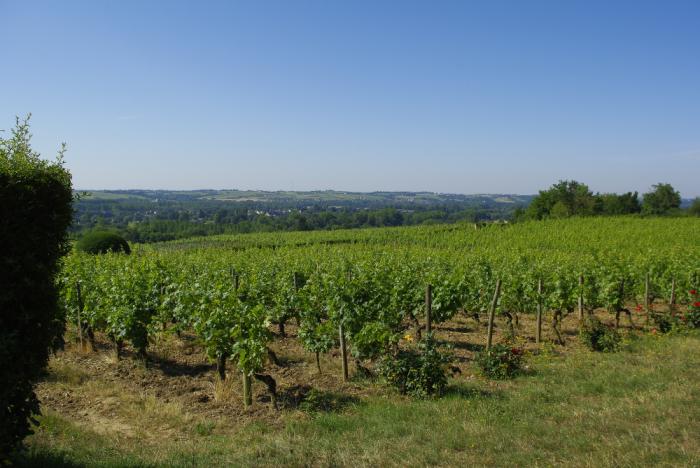 Vignoble de Rochefort-sur-Loire