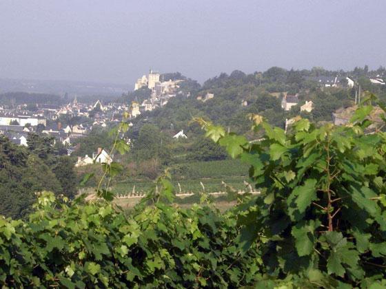Cravant-les-Coteaux, première commune de l'appellation Chinon avec 700 ha