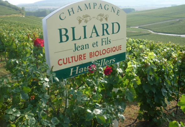 Vignoble de la maison Bliard à Hautvillers, en culture biologique (Photo FC)