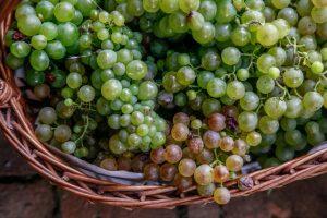 Le furmint représente à peine 9 % des vignes blanches de Hongrie.